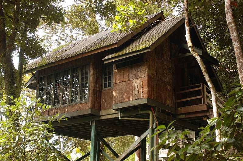Permai Rainforest Resort Baumhaus