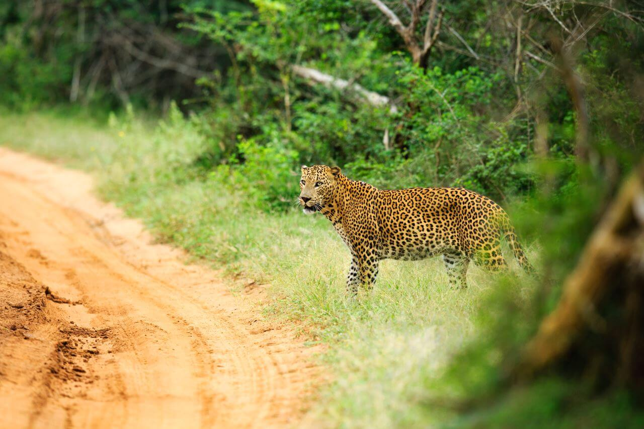 Chena Huts Yala Nationalpark