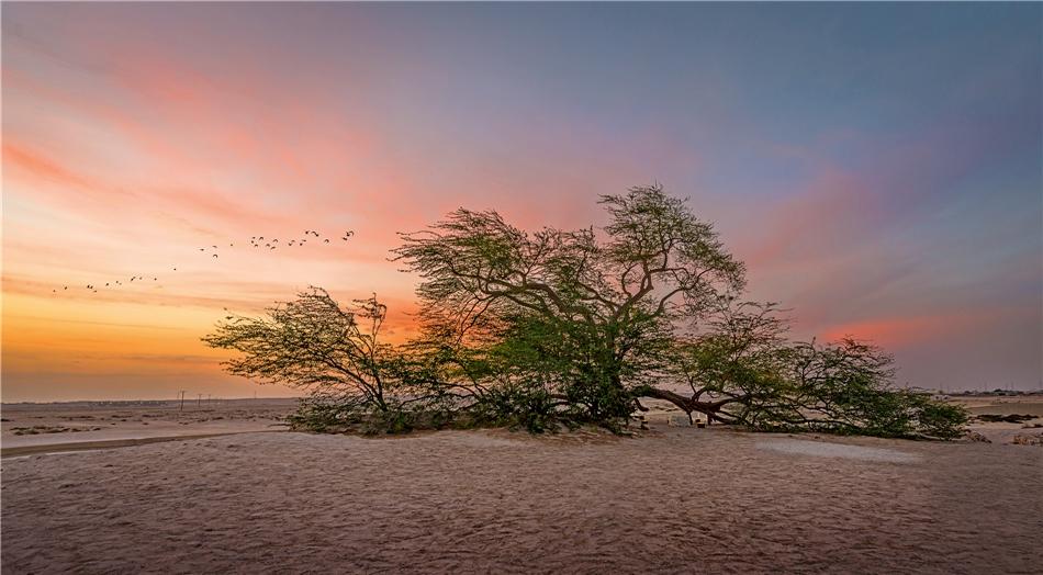 Immergrüner Tree of Life Bahrain