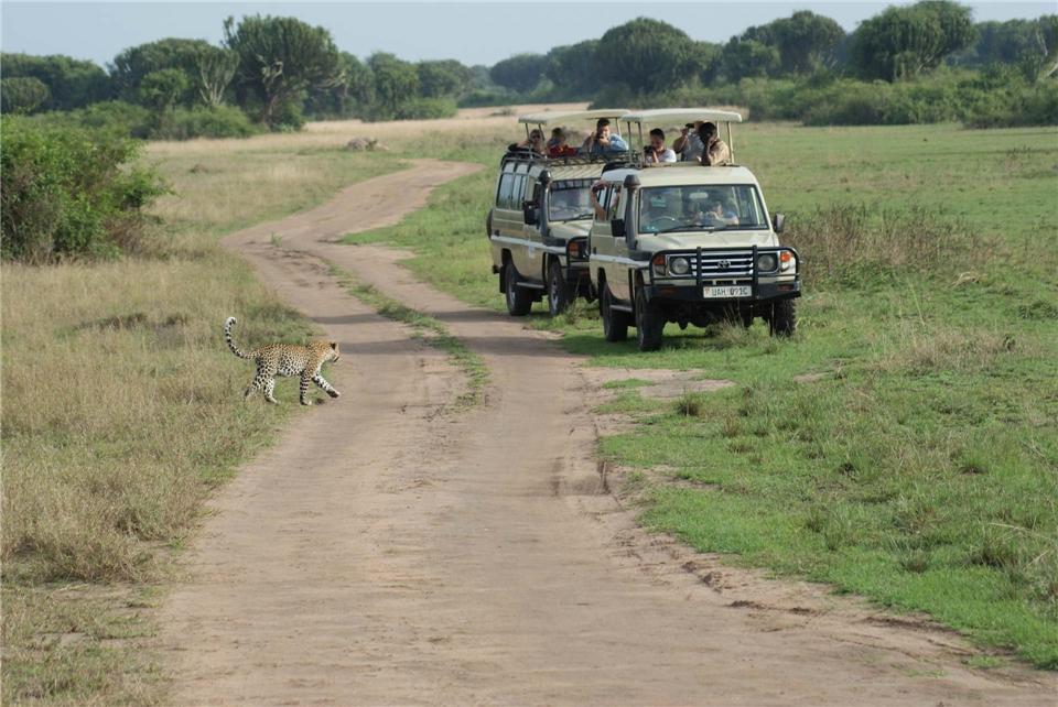 Uganda auf den spuren der Berggorillas Safaritour mit Leopard