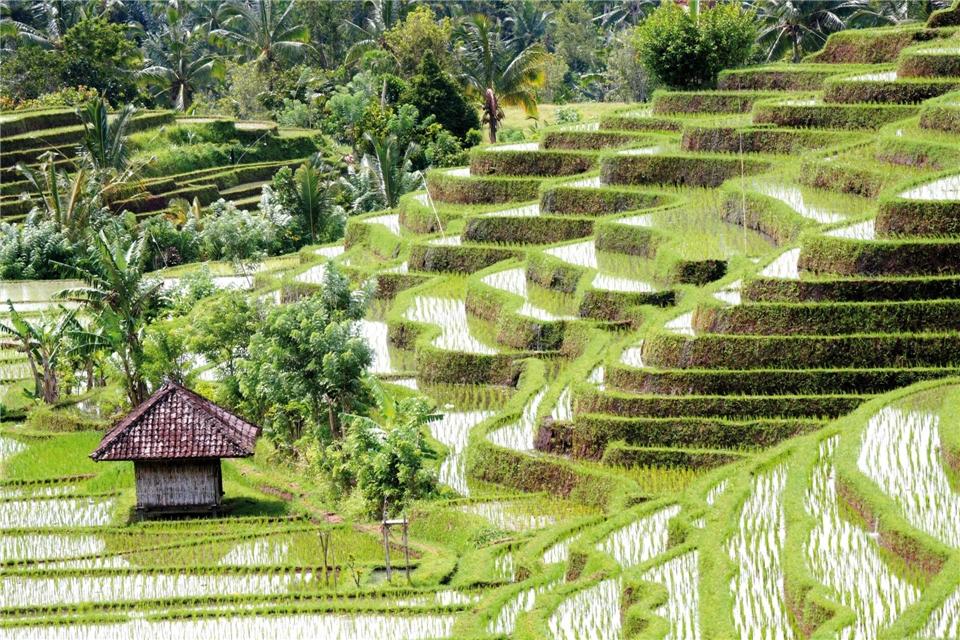 Indonesien - gruene Reisterrassen auf Bali
