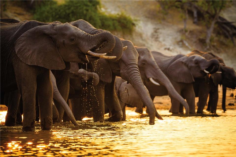Botswana hautnah Elefantenherde beim trinken