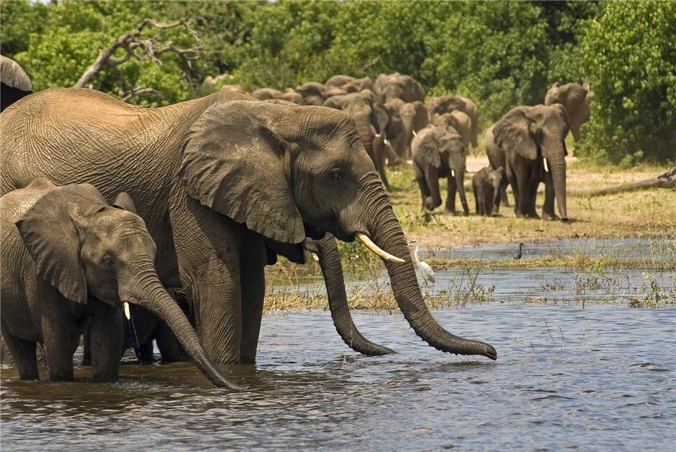 Botswana Elefanten am Wasserloch