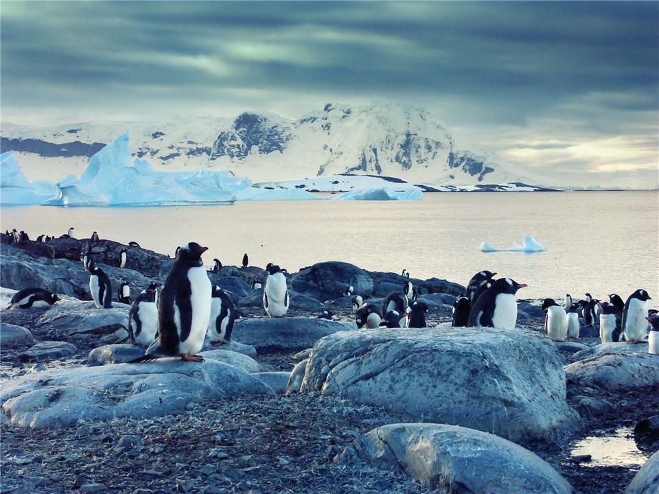 Silversea Silver Explorer Antarktis Landschaft mit Pinguinen