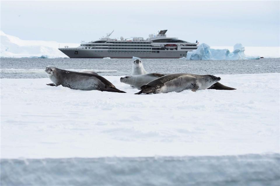 Ponant Le Lyrial Antarktis - Robben mit Schiff im Hintergrund