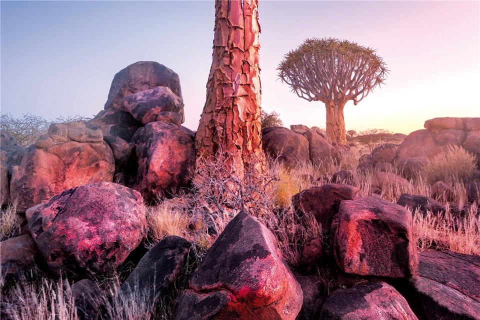 Namibia Köcher Baum Namibia Sonnenuntergang